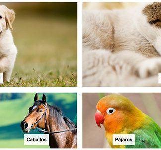 Tienda online mascotas amazon