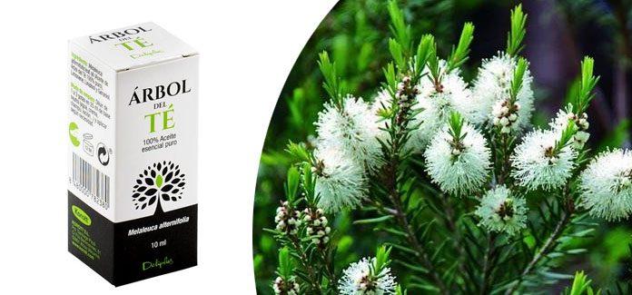 arbol del te mercadona - Aceite árbol del te Mercadona